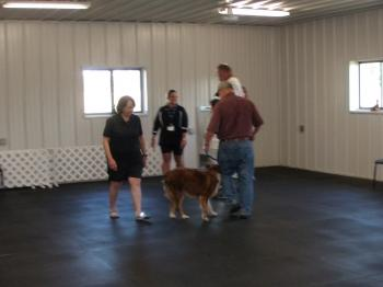Classes At The Town And Country Kennel Club Bloomington Il